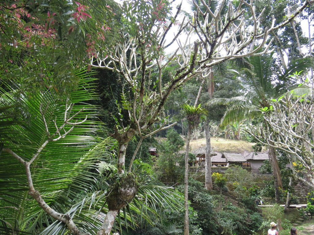 Nature à Gunung Kawi