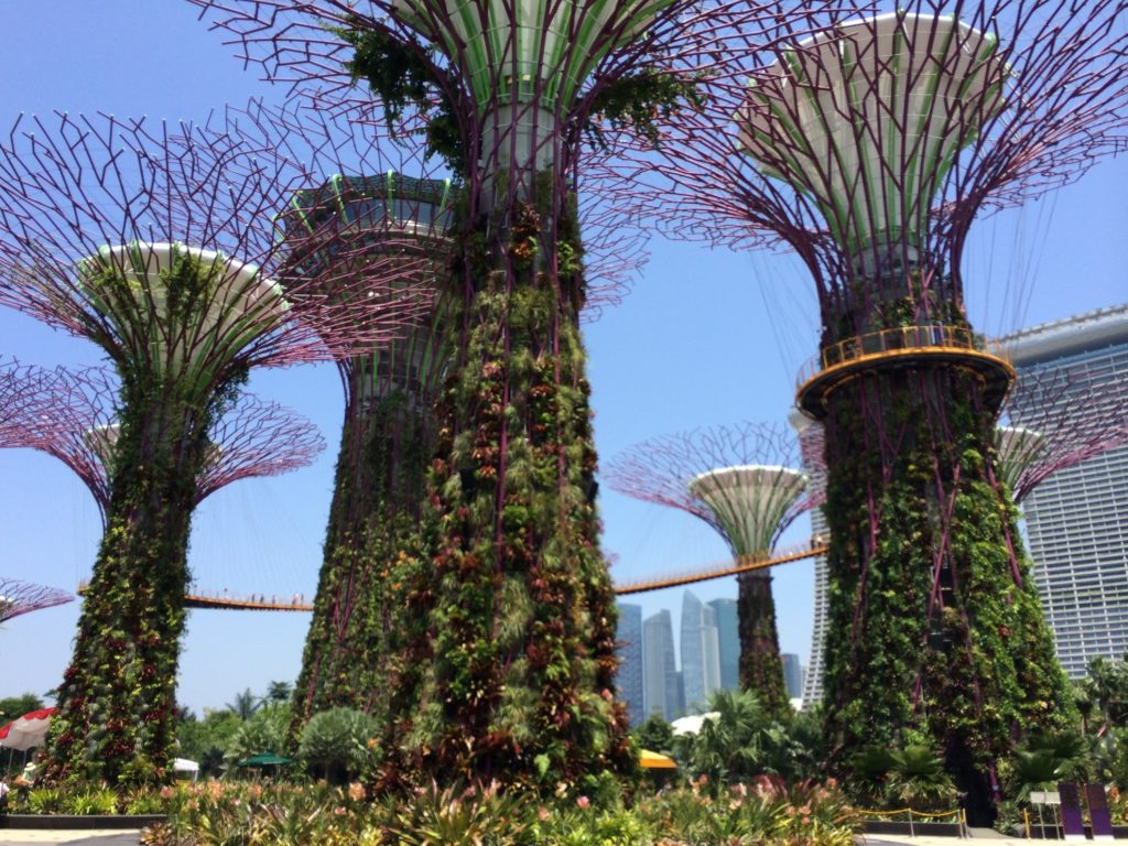 Supertrees à Gardens by the Bay