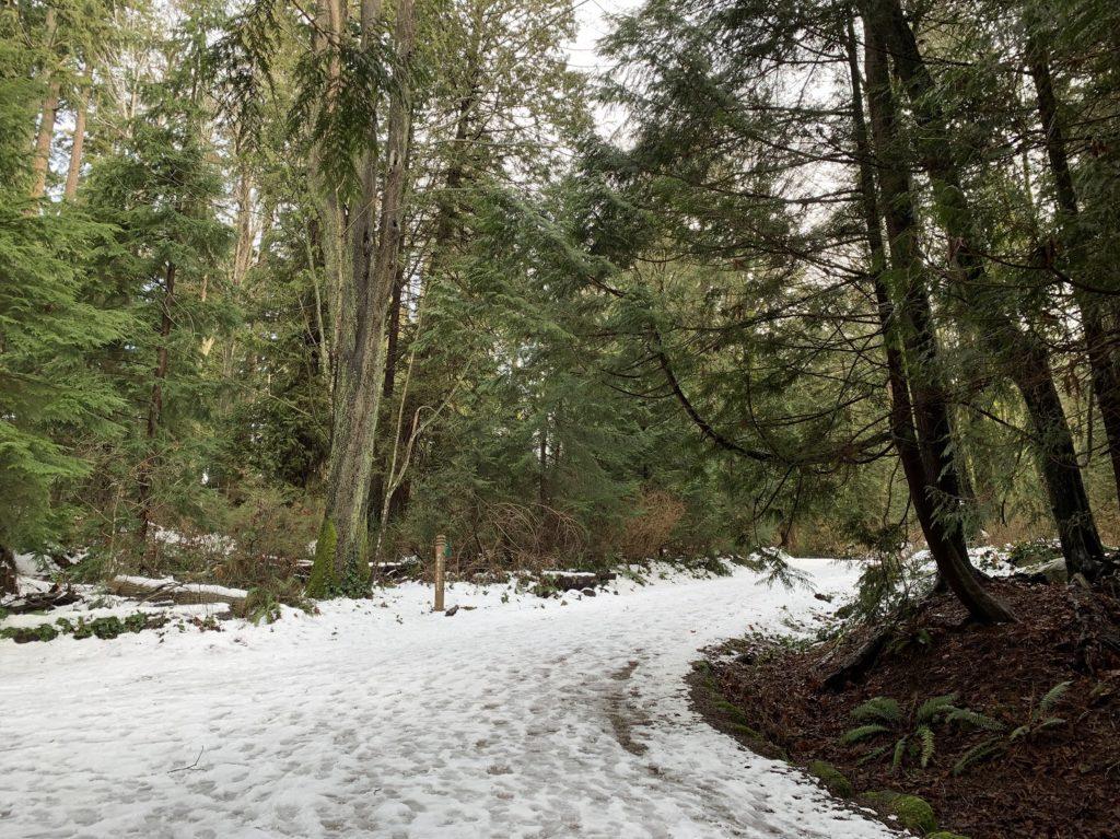 Chemin forestier dans Stanley Park